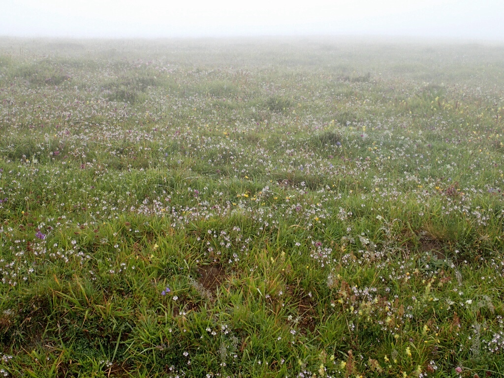Wildflowers in mist.