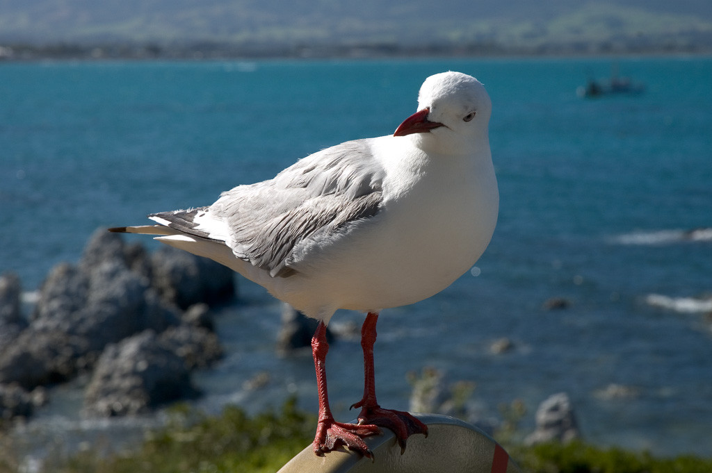seagull-on-sign